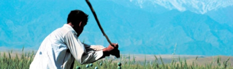 멀리 우람한 산맥이 바라다 보이는 아프가니스탄 동부 낭가르하르의 들판에서 아편 박멸작업이 한창이다. 가난한 아프간 농민에게 아편재배는 때로 유일한 생계수단이다. (Phto by Lee, Yu-Kyung)
